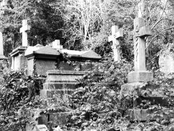 Overgrown tombs at Highgate Cemetery