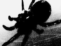 Black spider sm