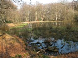 Blackweir Pond, Epping Forest, by Stephen Craven via Wikimedia Commons