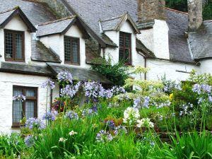 Chambercombe and flowers