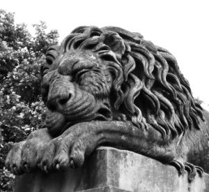 Sleeping Lion, image by Miss Jessel edited by Lenora