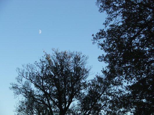 Twighlight in Studeley Royal park, Nov 2013