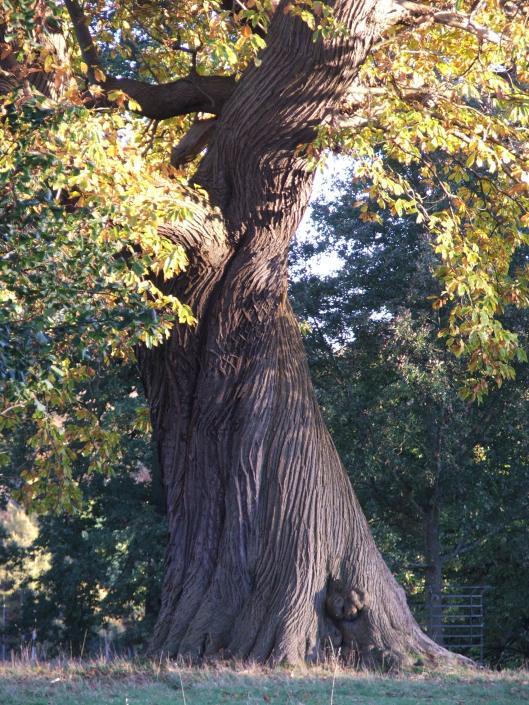 Studley Royal Park, Nov 2013