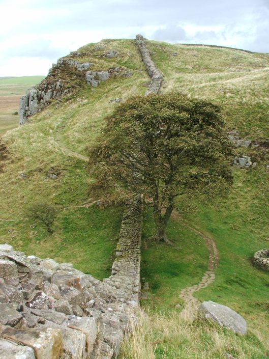 The Robin Hood 'Prince of Thieves' tree, Hadrian's Wall, 2007