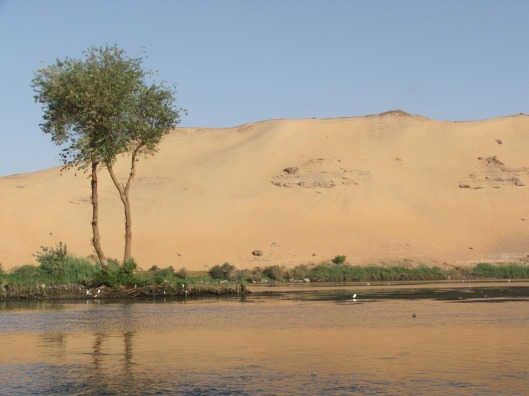 Nile Tree, Egypt 2009