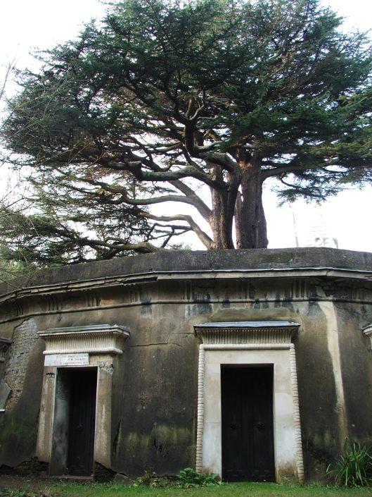 Cedar of Lebanon at Highgate Cemetery, Feb 2010