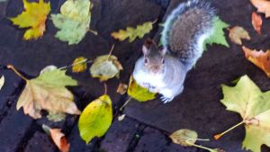 The squirrels of Bunhill