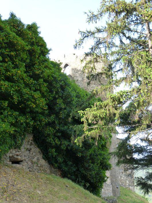 Nature taking over - Castillo de los Templarios