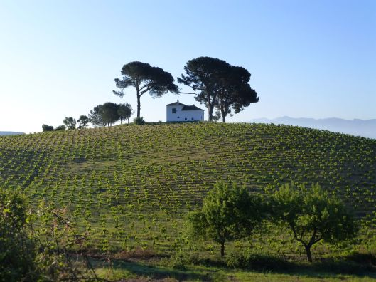 Through the fields and Vineyards to Villafranca