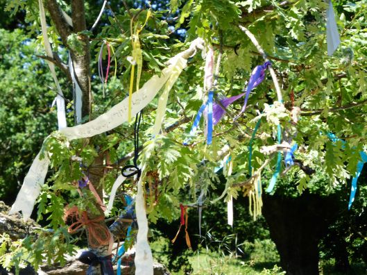 One of the many shrine trees along The Way.