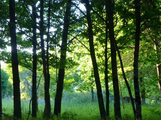 Dawn in the forests of Galicia