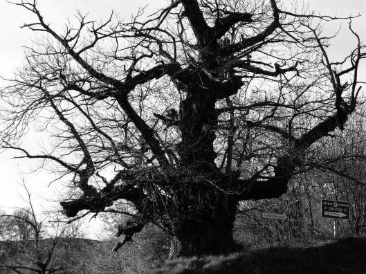 Tree on the way to Orisson, via Route de Napoleon, across the Pyranees