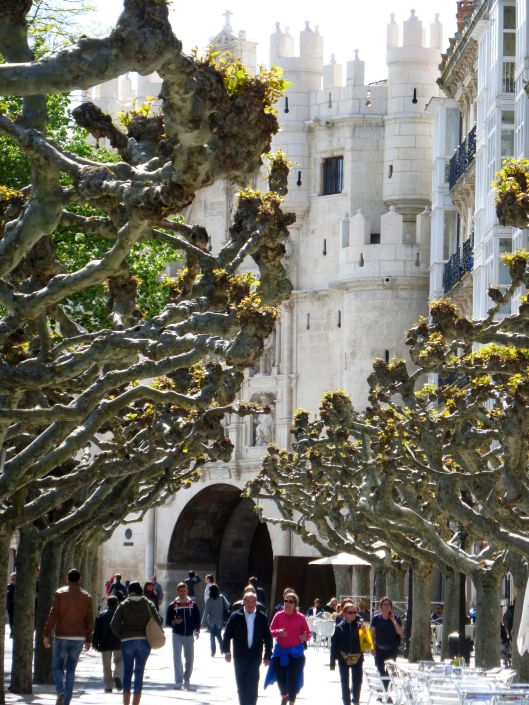 The Plane trees of the Espolon in Burgos