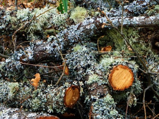 The trees and logs had some amazing moss and lichen growth.