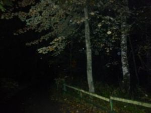 In the Woods_Orbs_4